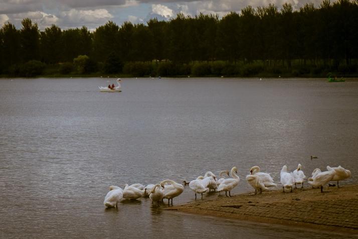 Wirral Lake