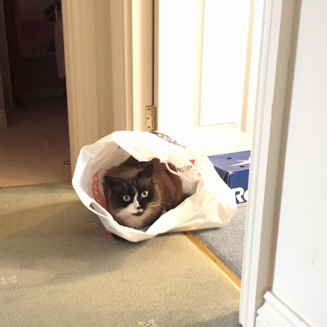 in Phil's modelling bag