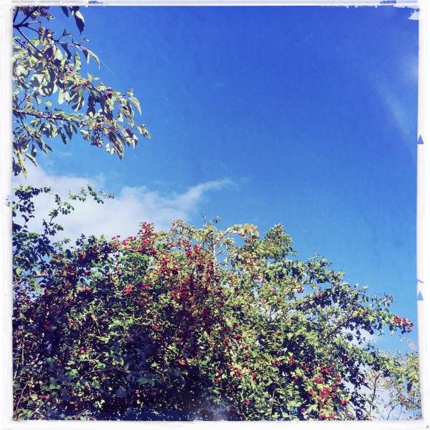 red green & blue (Emma Lens,Big Easy film)