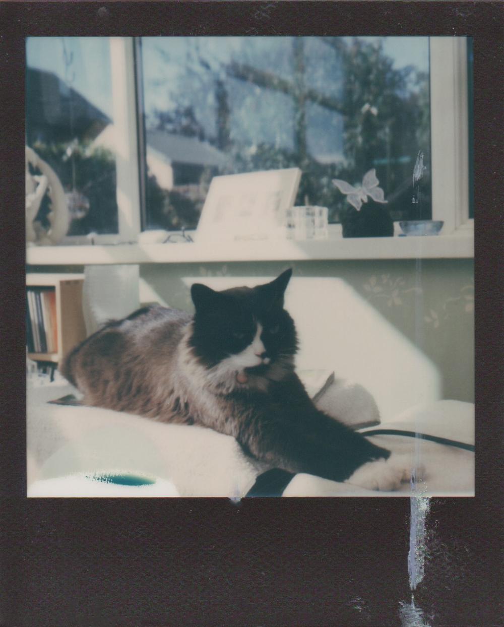 Skye in the sun (57)