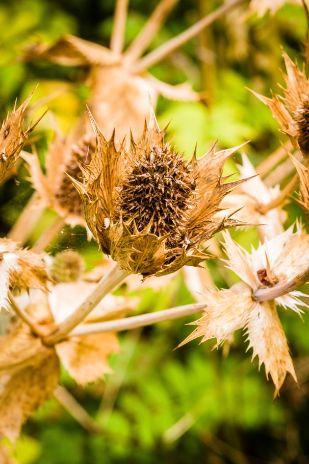 dead flower :)