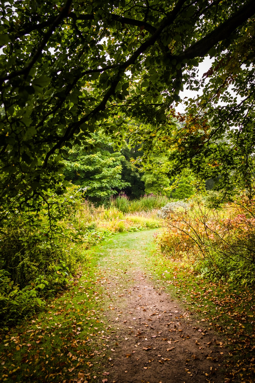 To the bog garden