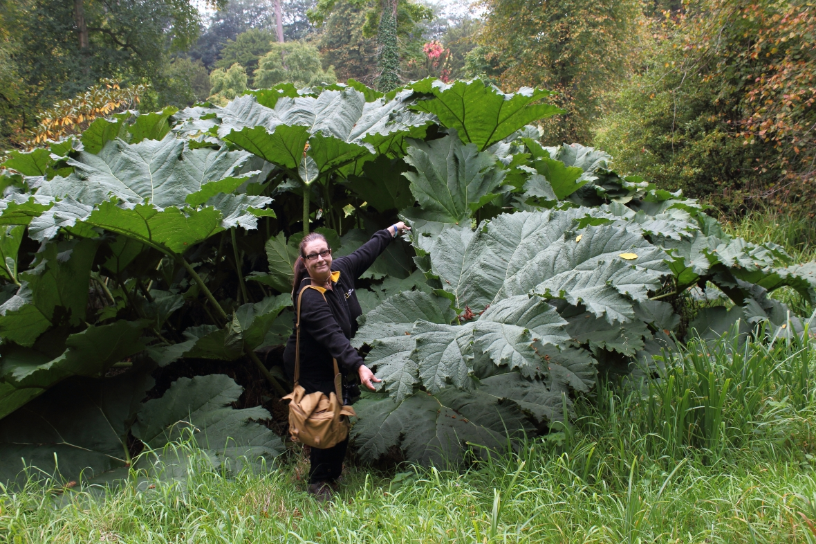 me & ginormous leaves