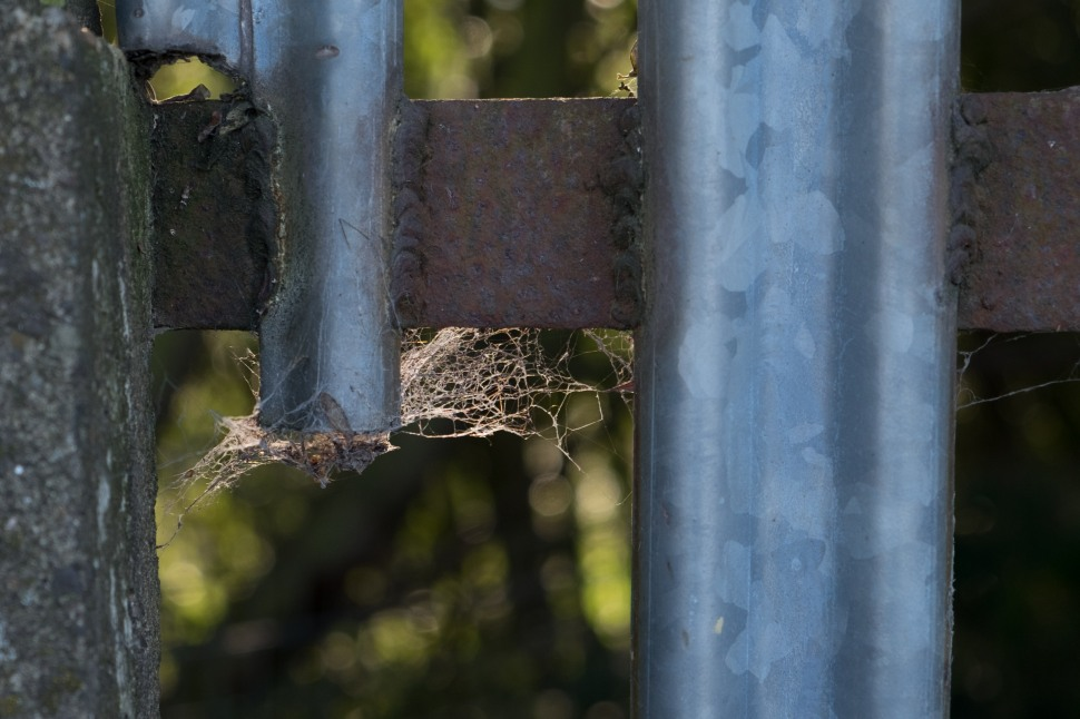 spidey fence