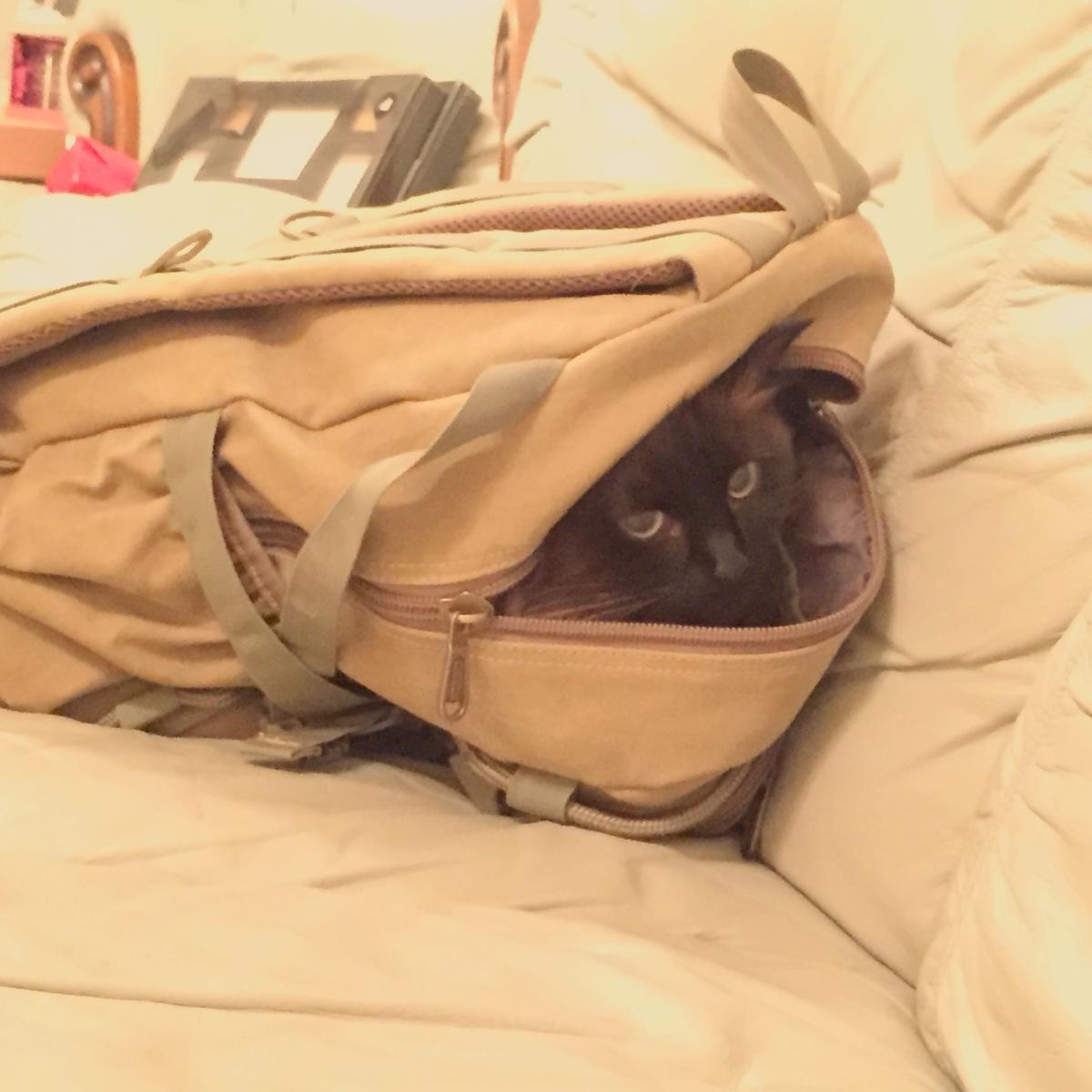 Bag puss 1