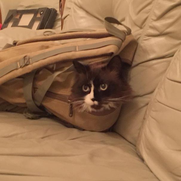 Bag puss 2 (Skye)