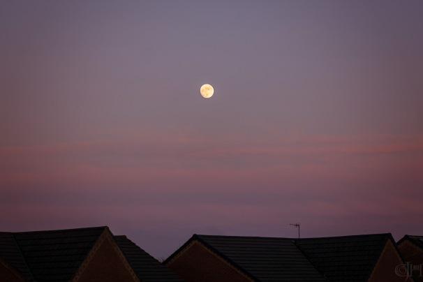 moonpink