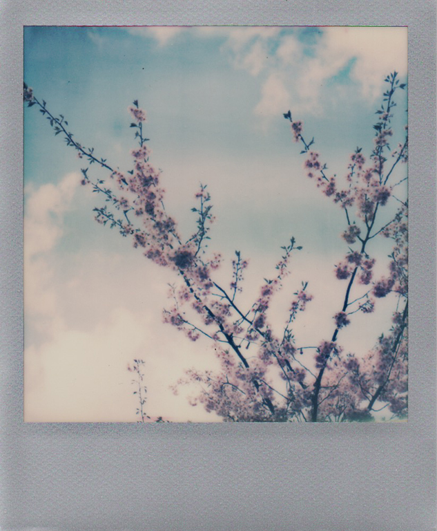 10 Blossom Tree