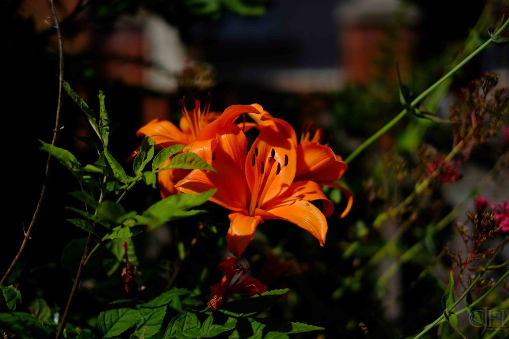 neighbours lilly