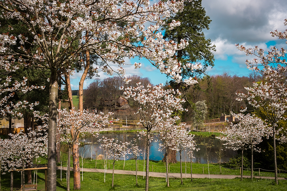 Alnwick Gardens ~ April 2018 ~ Part 1 ~ Tai Haku Blossom